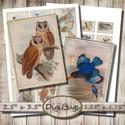 Vintage madár-illusztrációk - nyomtatható képek , Papír, Decoupage, szalvétatechnika, Decoupage minták, Madaras vintage illusztrációk - nyomtatható képkollázs   Min. 5 termék rendelésekor 400 Ft / kolláz..., Alkotók boltja