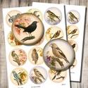 Madarak tavaszi virágokkal - digitális képkollázs , Papír, Gyöngy, ékszerkellék, Grafika, fotó, Vintage madárillusztrációk virágos háttéren - nyomtatható, kör alakú képek  Min. 5 termék rendelése..., Alkotók boltja