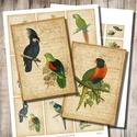 Nyomtatható papagájos képek - digitális kollázs, Papír, Scrapbook, Decoupage, szalvétatechnika, Grafika, fotó, Decoupage minták, Régi illusztrációk papagájokról - nyomtatható képkollázs   Min. 5 termék rendelésekor 400 Ft / koll..., Alkotók boltja