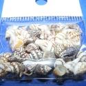 Kagyló/csiga (5/A minta/50 db), Gyöngy, ékszerkellék, Egyéb alkatrész, Ékszerkészítés, Mindenmás, Kagyló/csiga (5/A minta/50 db) Az ékszerkészítés dekoratív kiegészítője lehet a természetes alapany..., Alkotók boltja