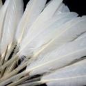 Dekorációs indián toll-8/A (10 db) - fehér (kicsi), Vegyes alapanyag, Alkotók boltja