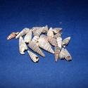 Kagyló/csiga-8 (20 db) - natúr orishell, Vegyes alapanyag, Mindenmás,  Kagyló/csiga-8 - orishell - natúr - csigaház  Mérete: 10-25 mm  Az ár 20 darab termékre vonatkozi..., Alkotók boltja