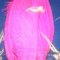 Dekorációs indián toll-21 (10 db) - pink , Vegyes alapanyag, Mindenmás,  Dekorációs indián toll-21 - pink  A tollak mérete: 18-20 cm A csomag tartalma 10 db madártoll. Az..., Alkotók boltja