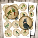Papagájok - digitális képek ékszerkészítéshez , Papír, Gyöngy, ékszerkellék, Vintage papagáj-illusztrációk - nyomtatható, kör alakú képek  Min. 5 termék rendelésekor 400 Ft / ko..., Alkotók boltja
