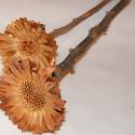 Protea (egzotikus száraz virág), Dekorációs kellékek, Fa, Virágkötészet, Száraz virág kompozíciókhoz használható egzotikus alapanyag. Vázába önállóan és más száraz virágok ..., Alkotók boltja