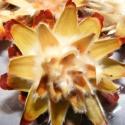 Protea (Szárazvirág), Vegyes alapanyag, Dekorációs kellékek, Virágkötészet, Mindenmás, Száraz kötészeti munkák alapanyaga.Drótozható,ragasztható. Természetes színben kapható.  Méret:20cm..., Alkotók boltja