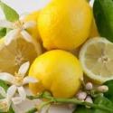 CITRUS 100 % tisztaságú illóolaj 10 ml, Vegyes alapanyag, Szappan, Citrus 100 % tisztaságú illóolaj  Kiszerelés: 10 ml. , Alkotók boltja