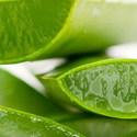 ALOE VERA GÉL 100 ml, Vegyes alapanyag, Egyéb alapanyag, Mindenmás, Szappankészítés, ALOE VERA GÉL 100 ml  Az aloe vera eredetileg a trópusokon őshonos növény, az egyik legrégebben has..., Alkotók boltja
