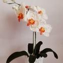 Horgolt orchidea, Otthon & lakás, Dekoráció, Dísz, Horgolás, Mindenmás, Horgolt  orchidea kaspóba rögzítve. Magassága kaspóval együtt kb. 43 cm.  Szobadísznek ajánlom, pl...., Meska