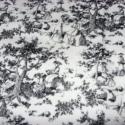 Az örörk fekete-fehér- toile stílus patchwork USA design textil 55 x 30 cm minőségi  USA design , Textil, Pamut, Kiváló minőségű - egyedi tervezésű - jogvédett termék -  Textil - akár - patchwork - anyag  USA Desi..., Alkotók boltja