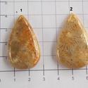 Natural Teleflora Fossil Coral 4, Gyöngy, ékszerkellék, Cabochon, Ékszerkészítés, AAA+++ minőségű Corall fossilia féldrágakövek! Mind gyönyörű mintás, szép fényesre csiszolva!    Az..., Alkotók boltja