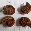 Ammonite  1., Gyöngy, ékszerkellék, Cabochon, Ékszerkészítés, Nagyon különlegesek ezek a csigák. Finom rajzolatuk szó szerint egy csoda!  Több minden lehet  belő..., Alkotók boltja