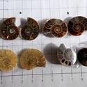 Ammonite  2, Gyöngy, ékszerkellék, Cabochon, Ékszerkészítés, Nagyon különlegesek ezek a csigák. Finom rajzolatuk szó szerint egy csoda!  Több minden lehet  belő..., Alkotók boltja