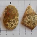 Natural Teleflora Fossil Coral 9, Gyöngy, ékszerkellék, Cabochon, AAA+++ minőségű Corall fossilia féldrágakövek! Mind gyönyörű mintás, szép fényesre csiszolva!    Az ..., Alkotók boltja