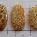 Natural Teleflora Fossil Coral 11, Gyöngy, ékszerkellék, Cabochon, Alkotók boltja